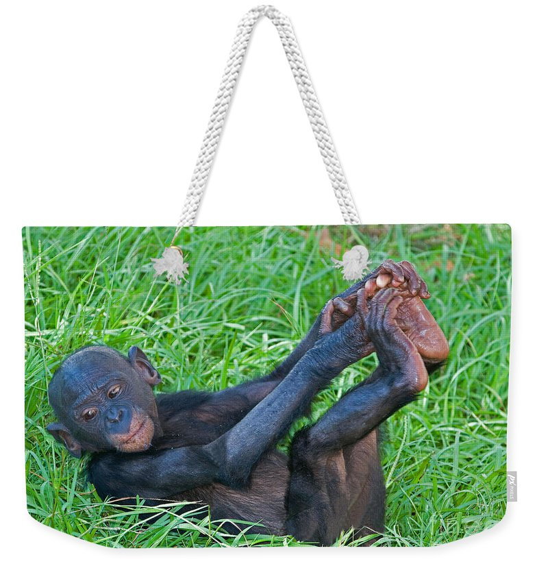 Nature Weekender Tote Bag featuring the photograph Bonobo Baby by Millard H. Sharp