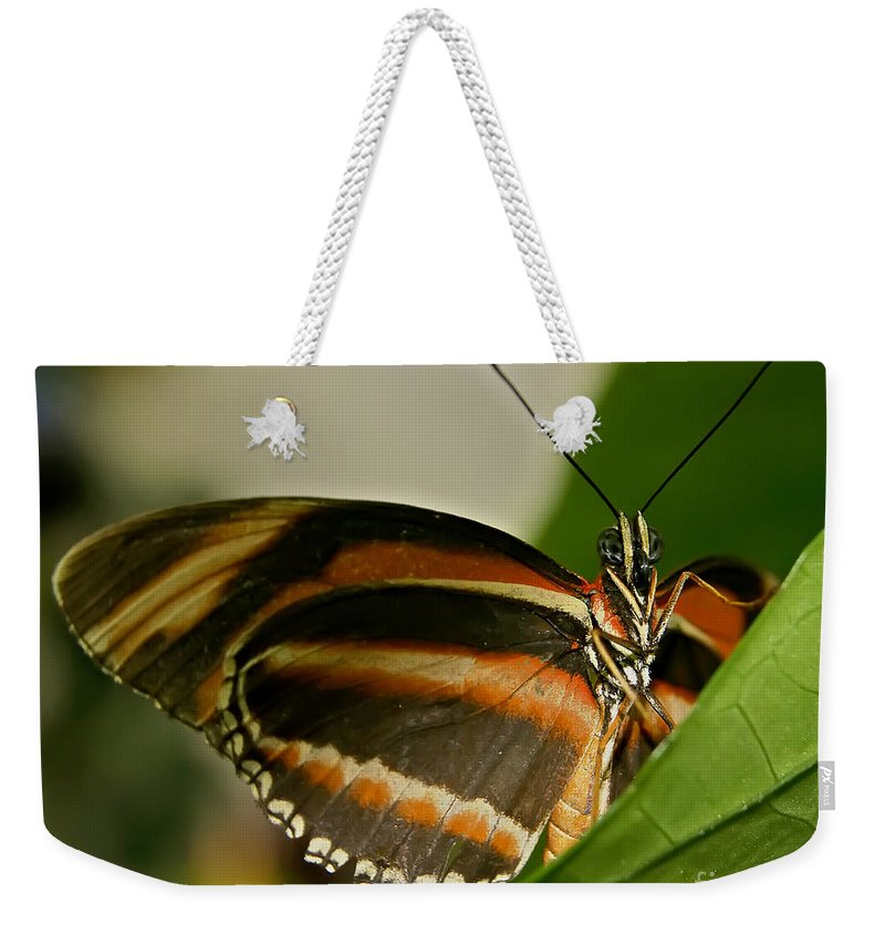 Butterfly Weekender Tote Bag featuring the photograph Butterfly by Olga Hamilton