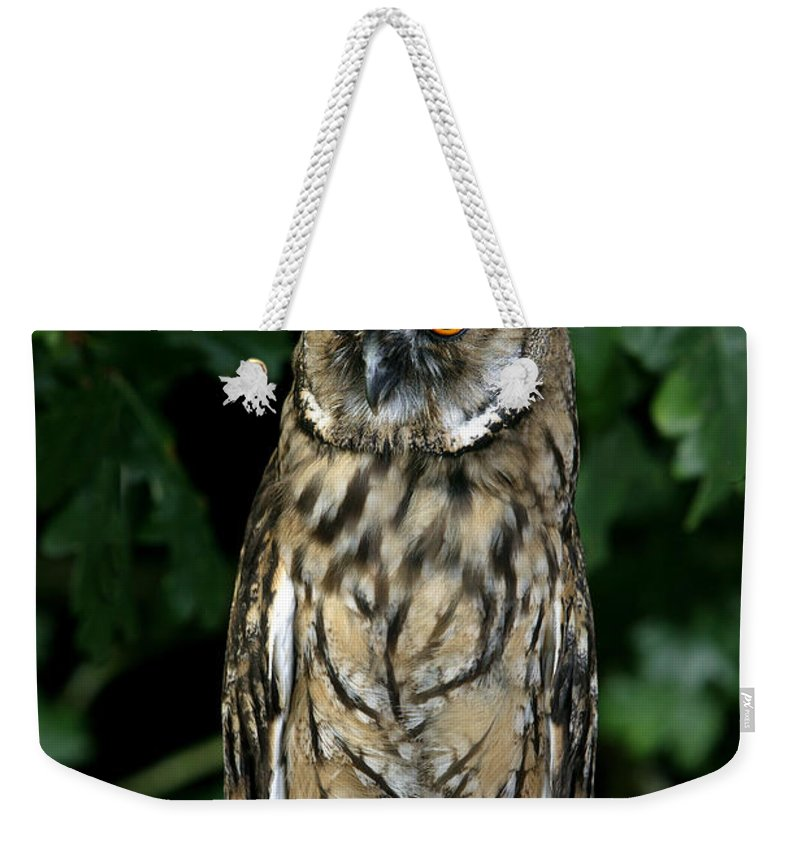 Adult Weekender Tote Bag featuring the photograph Hibou Moyen Duc Asio Otus by Gerard Lacz