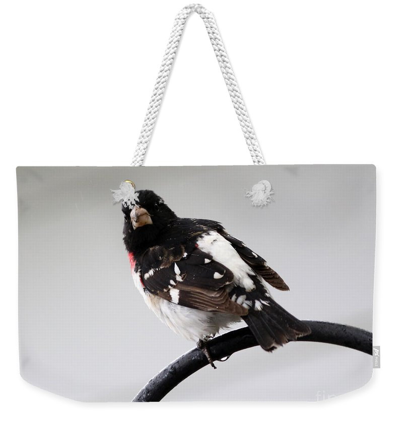 Rose Breasted Grosbeak Weekender Tote Bag featuring the photograph Rose Breasted Grosbeak by Lori Tordsen