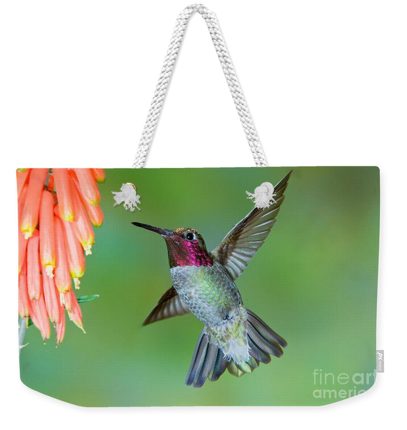 Animal Weekender Tote Bag featuring the photograph Annas Hummingbird by Anthony Mercieca