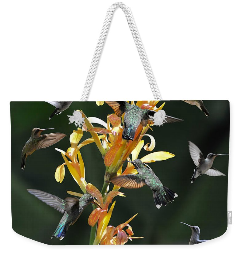 Hummingbird Weekender Tote Bag featuring the photograph 15 Hummingbirds by David Perry Lawrence