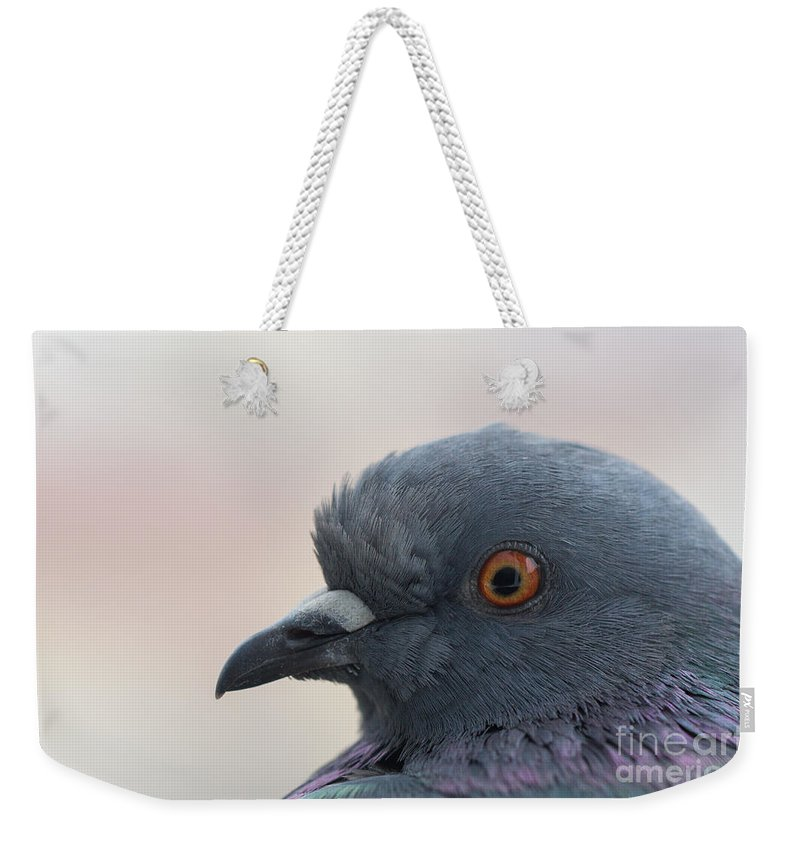 Birds Weekender Tote Bag featuring the photograph Rock Dove by Jivko Nakev