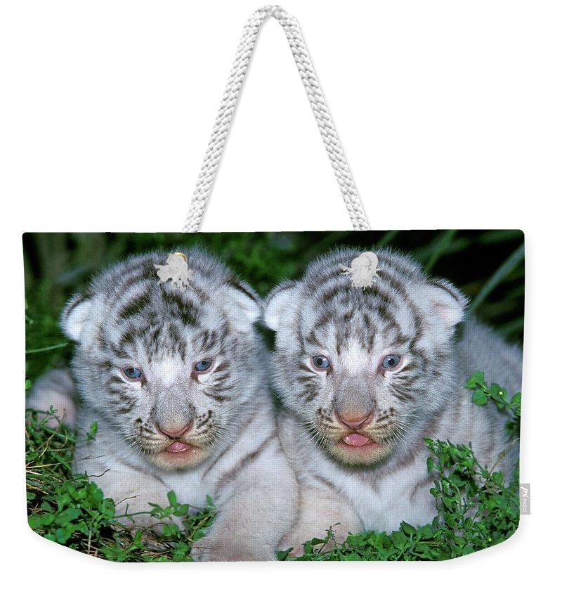 Animal Weekender Tote Bag featuring the photograph Tigre Blanc Panthera Tigris by Gerard Lacz