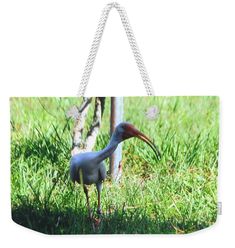 Searching My Back Yard Weekender Tote Bag featuring the photograph White Ibis by Robert Floyd