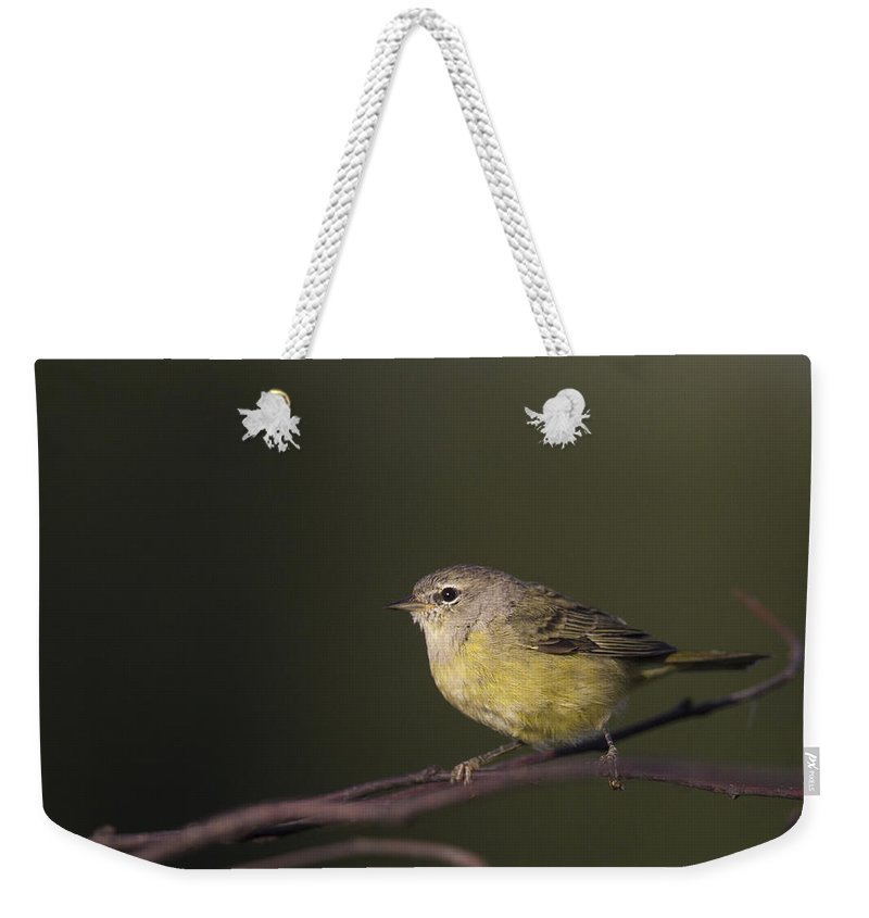 Doug Lloyd Weekender Tote Bag featuring the photograph Orangecrowned Warbler by Doug Lloyd