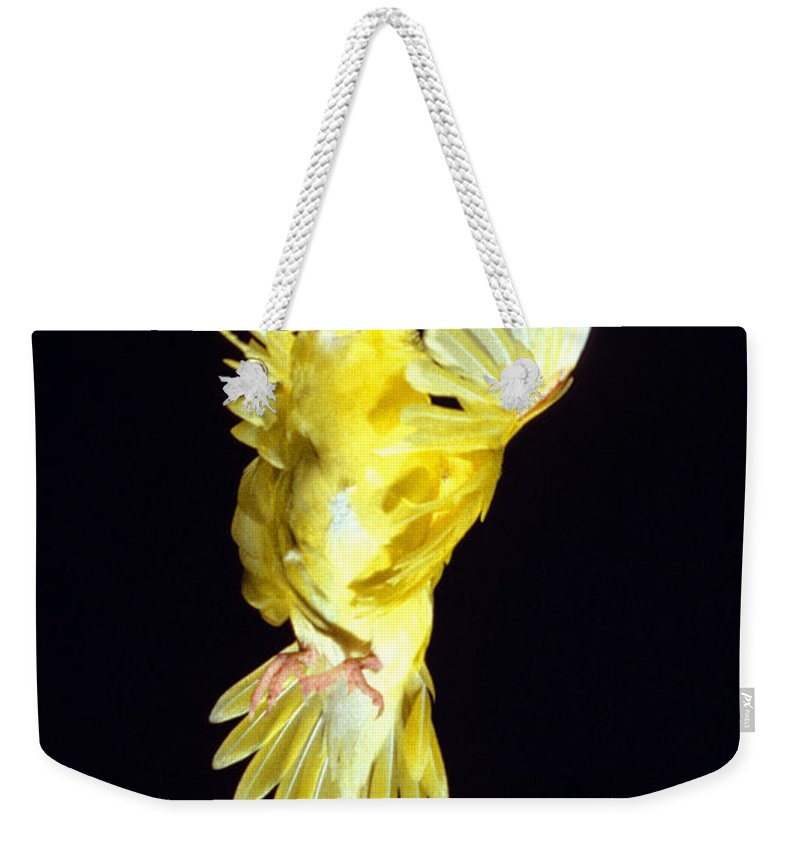 Adult Weekender Tote Bag featuring the photograph Perruche Ondulee Melopsittacus Undulatus by Gerard Lacz