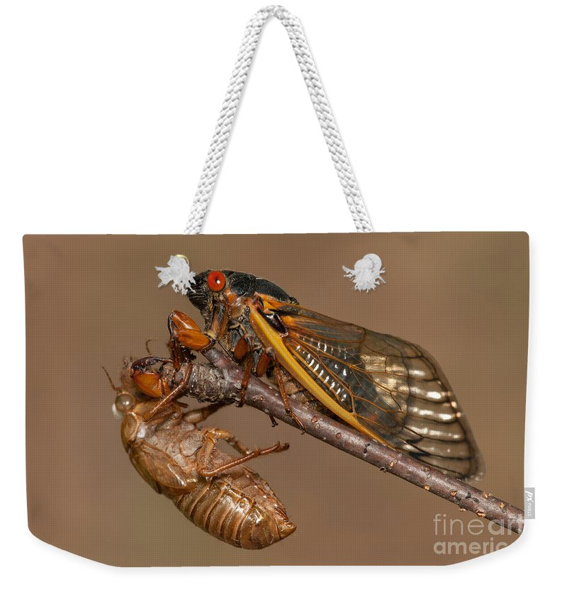 Clarence Holmes Weekender Tote Bag featuring the photograph 17-year Periodical Cicada II by Clarence Holmes