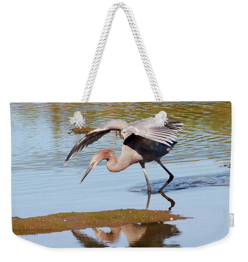 Bird Weekender Tote Bag featuring the photograph Birds Of The World by Hal Beral - Vwpics
