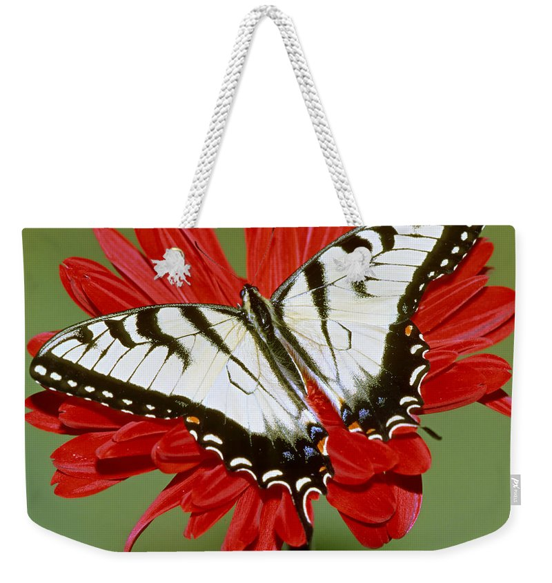 Butterfly Weekender Tote Bag featuring the photograph Eastern Tiger Swallowtail Butterfly by Millard H. Sharp