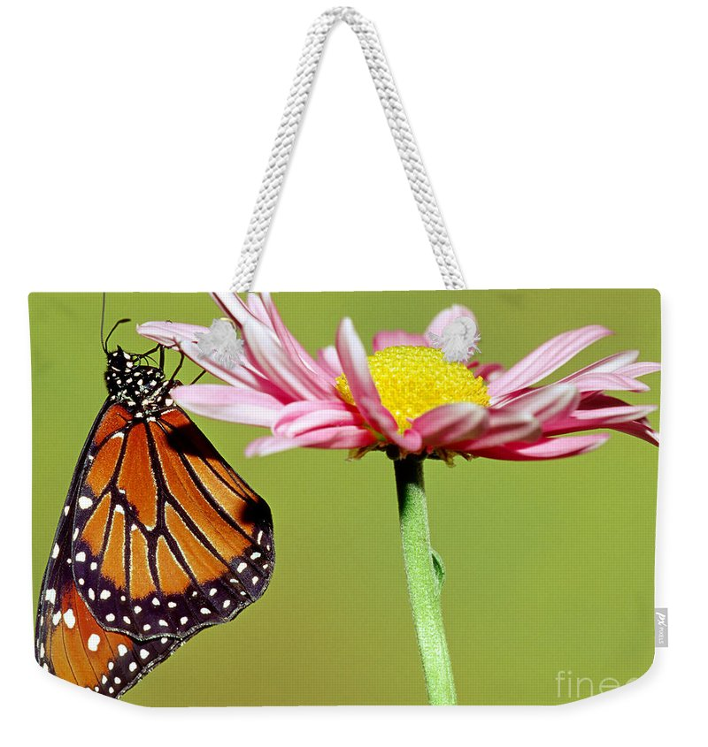 Nature Weekender Tote Bag featuring the photograph Queen Butterfly by Millard H. Sharp