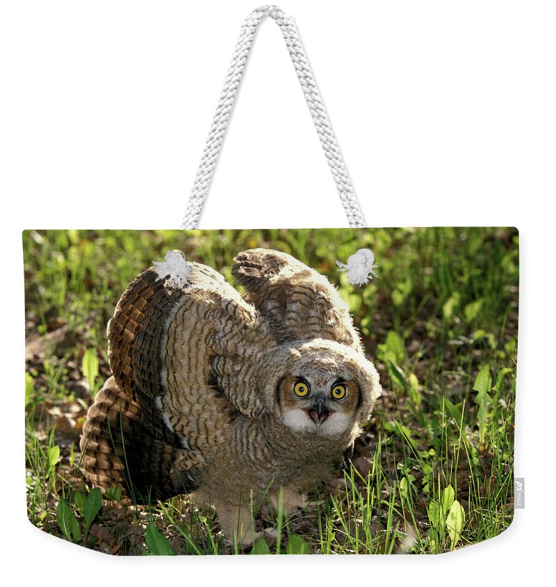 Species Weekender Tote Bag featuring the photograph Nature And Wildlife by Dennis Fast