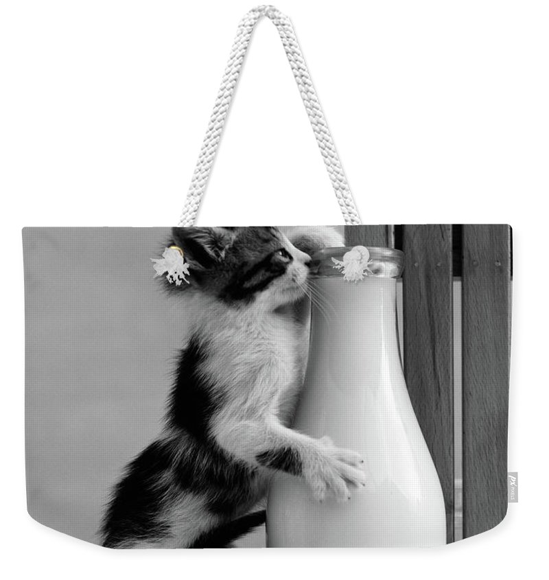 Photography Weekender Tote Bag featuring the photograph 1960s Kitten Straddled On Hind Legs by Vintage Images