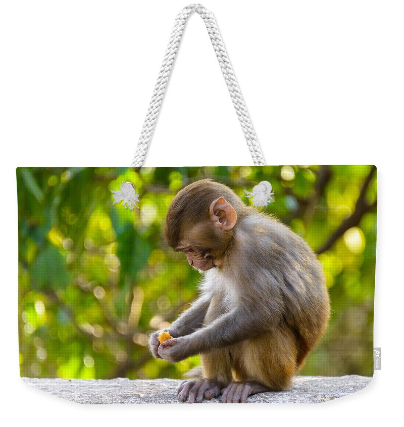 Macaque Weekender Tote Bag featuring the photograph A Baby Macaque Eating An Orange by Dutourdumonde Photography