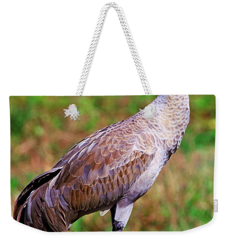 Nature Weekender Tote Bag featuring the photograph Adult Sandhill Crane by Millard H. Sharp