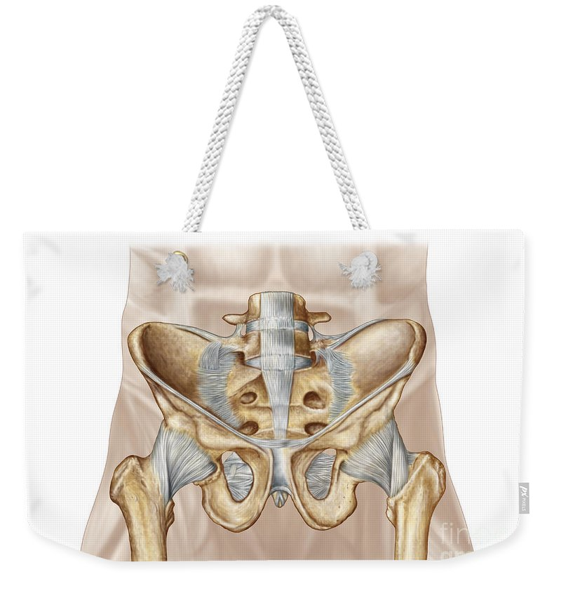 Color Image Weekender Tote Bag featuring the digital art Anatomy Of Human Pelvic Bone by Stocktrek Images