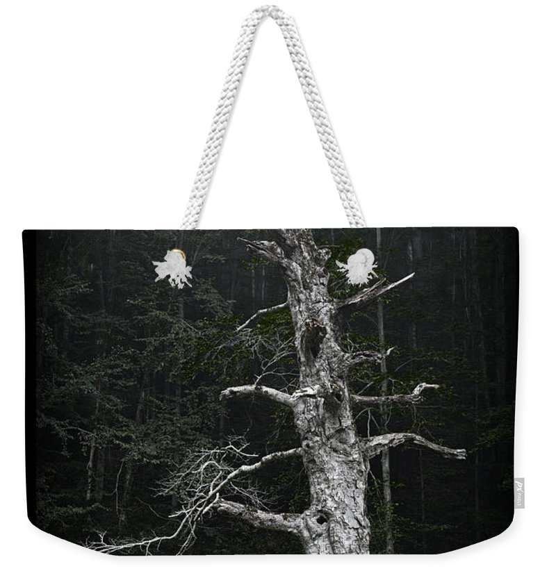 Ancient Weekender Tote Bag featuring the photograph Anthropomorphic Tree by John Stephens