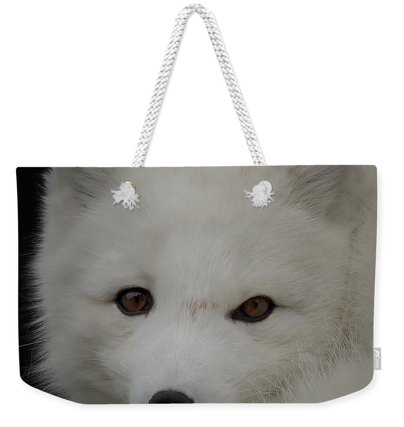White Fox Weekender Tote Bag featuring the photograph Arctic White Fox Vi by Athena Mckinzie