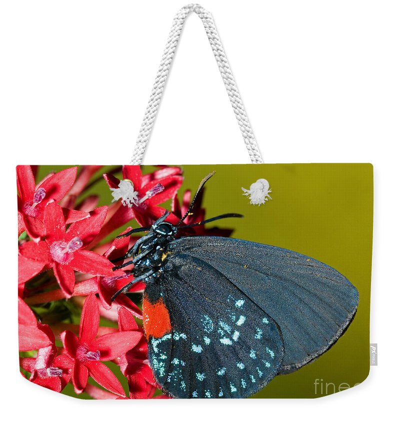 Atala Weekender Tote Bag featuring the photograph Atala Butterfly by Millard H. Sharp