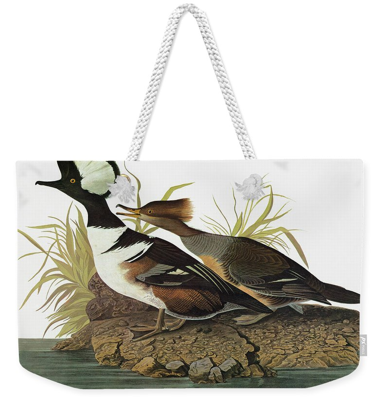 1827 Weekender Tote Bag featuring the painting Audubon Merganser 2 by Granger