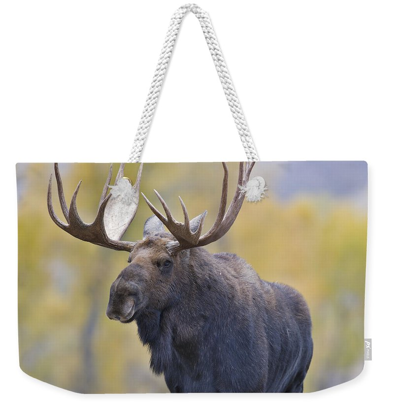 Autumn Weekender Tote Bag featuring the photograph Autumn Bull Moose IIi by Gary Langley
