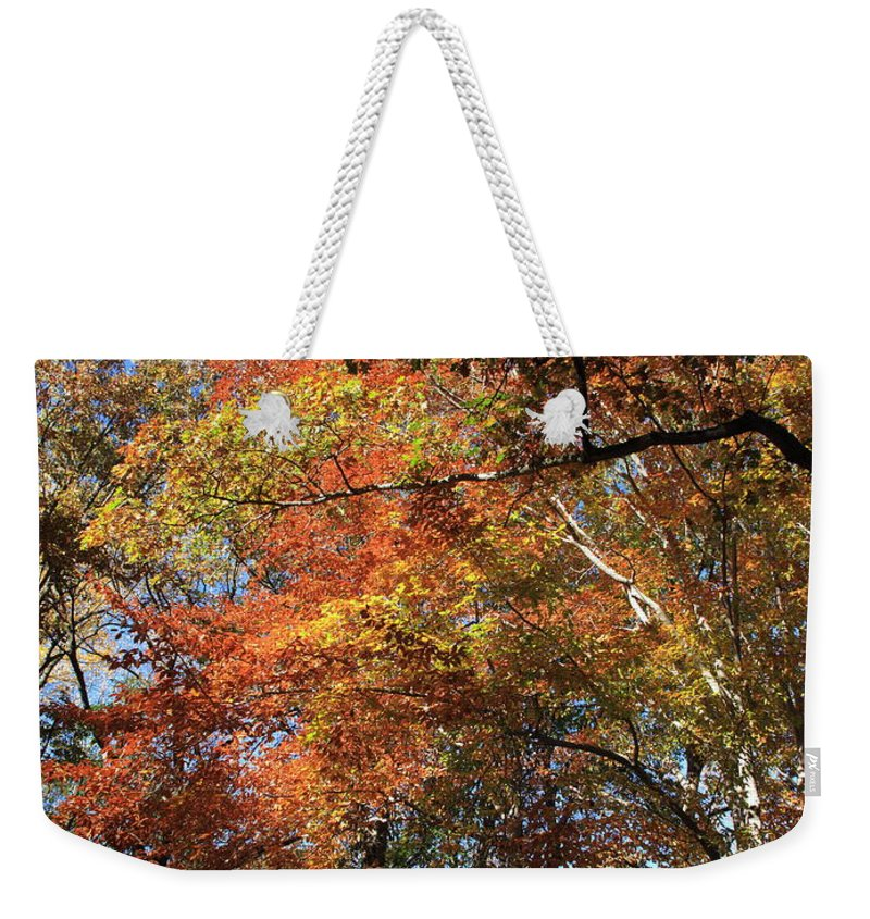 Art Weekender Tote Bag featuring the photograph Autumn Trees by Frank Romeo