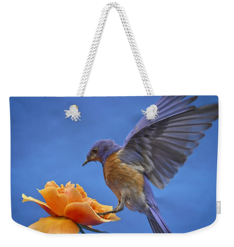 Animals Weekender Tote Bag featuring the photograph Balancing Act by Jean Noren