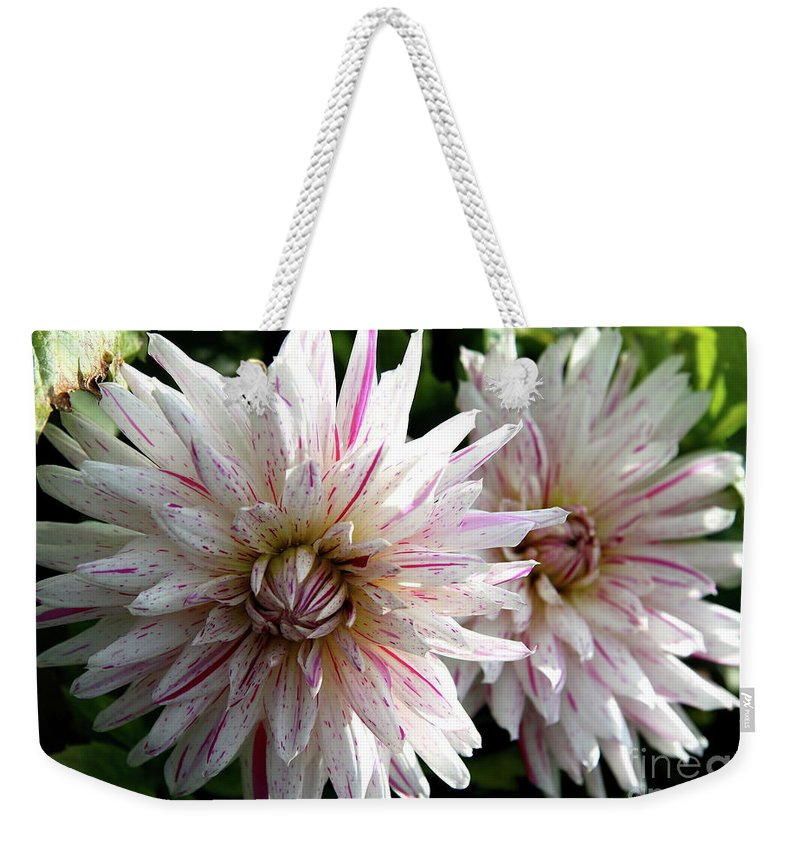 Dahlia Weekender Tote Bag featuring the photograph Beautiful Twins by Christiane Schulze Art And Photography