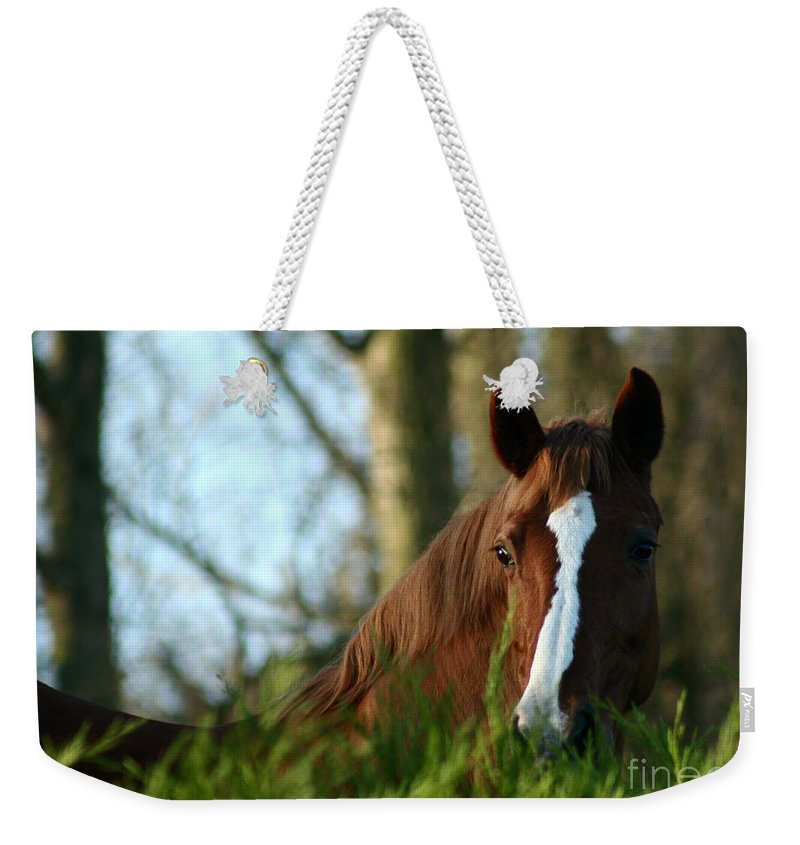 Chestnut Horse Weekender Tote Bag featuring the photograph Behind The Fence by Angel Tarantella