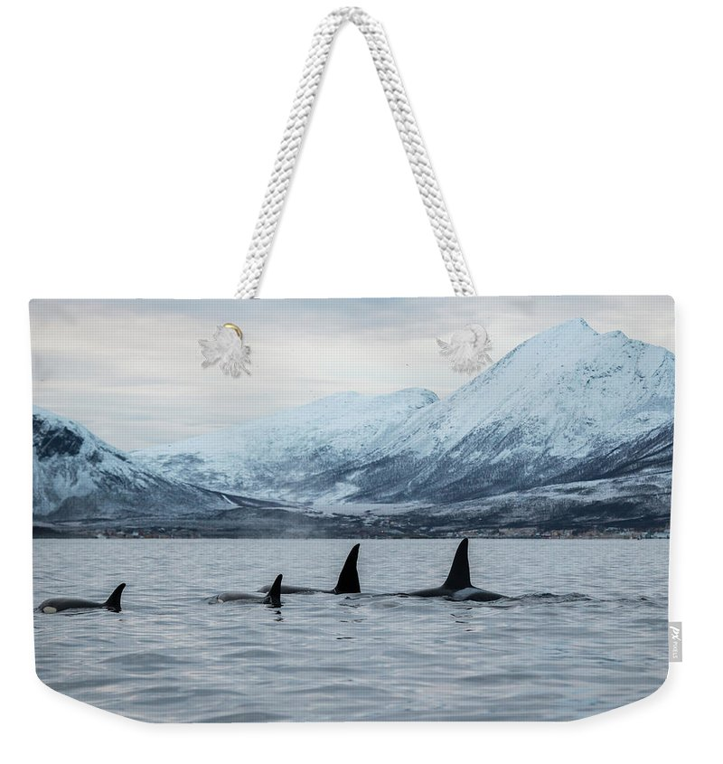 Snow Weekender Tote Bag featuring the photograph 2 Big 2 Small by By Wildestanimal
