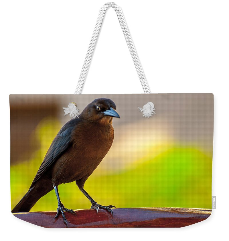Animal Weekender Tote Bag featuring the photograph Bird by Amel Dizdarevic