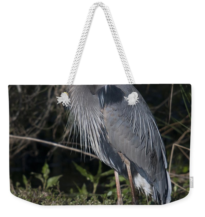 Great Blue Heron Weekender Tote Bag featuring the photograph Birds Of The Lowcountry by Dale Powell