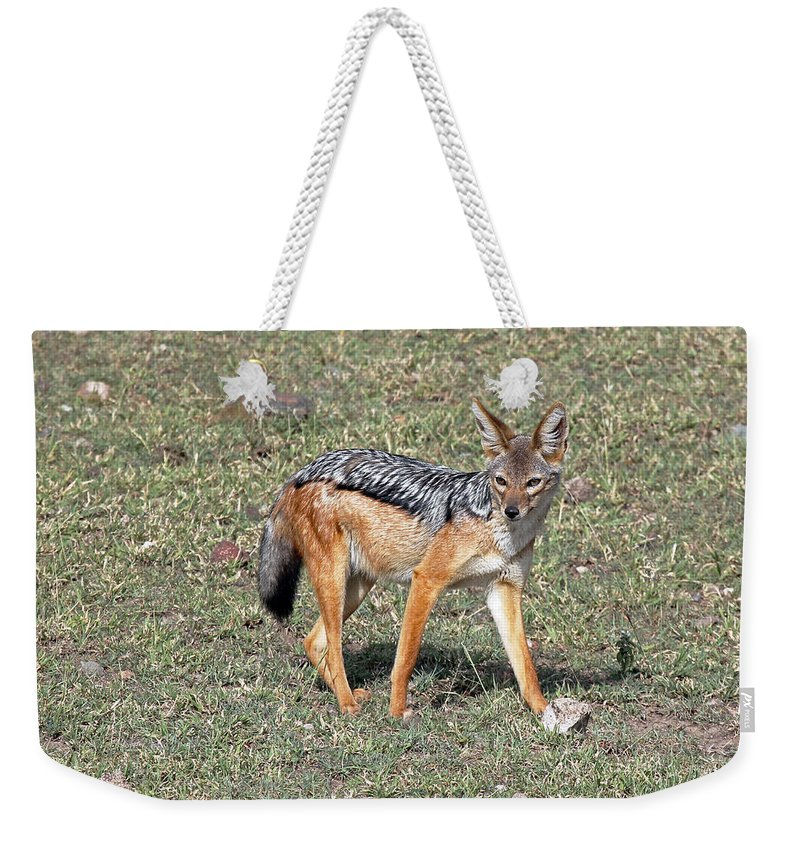Jackal Weekender Tote Bag featuring the photograph Black Backed Jackal by Tony Murtagh
