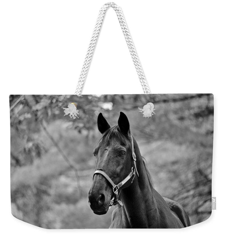 Horse Weekender Tote Bag featuring the photograph Black Beauty by Stacy White