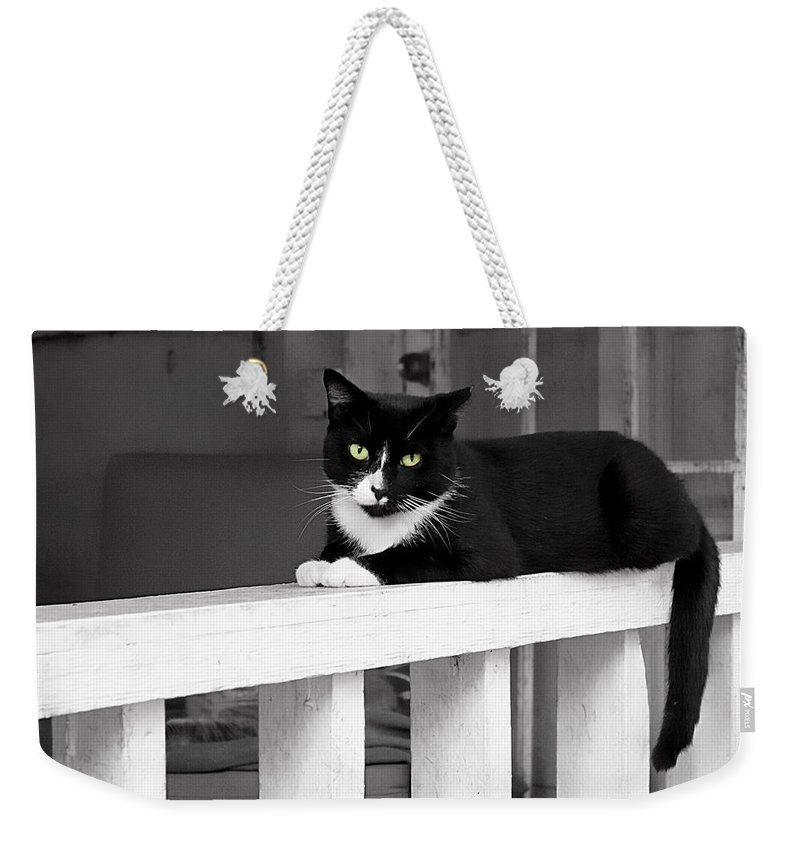 Cat Weekender Tote Bag featuring the photograph Black Cat by Carlos Diaz
