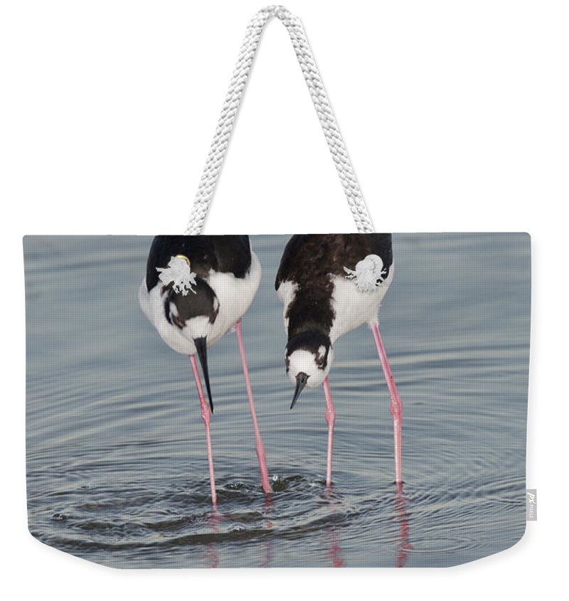 Black-necked Stilt Weekender Tote Bag featuring the photograph Black-necked Stilt by Anthony Mercieca