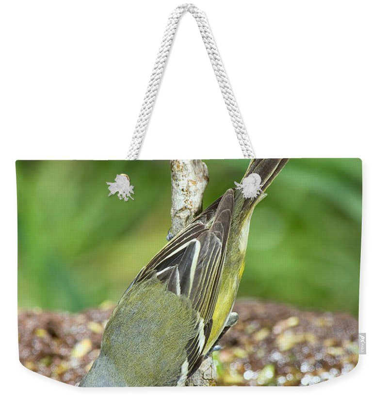 Fauna Weekender Tote Bag featuring the photograph Blue-headed Vireo by Anthony Mercieca