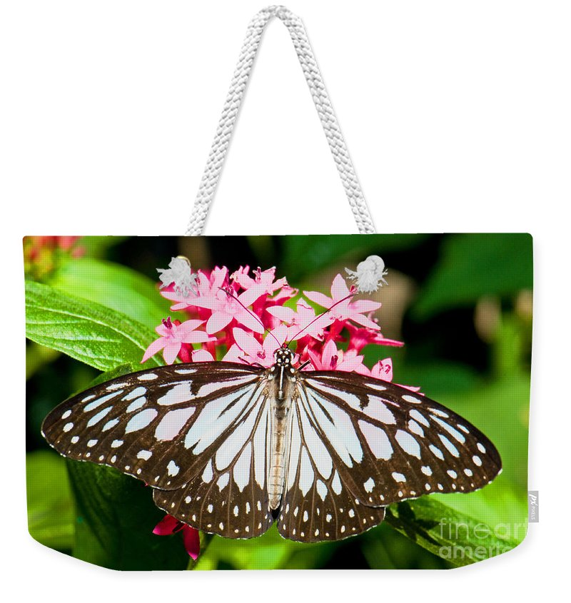 Nature Weekender Tote Bag featuring the photograph Blue Tiger Butterfly by Millard H. Sharp