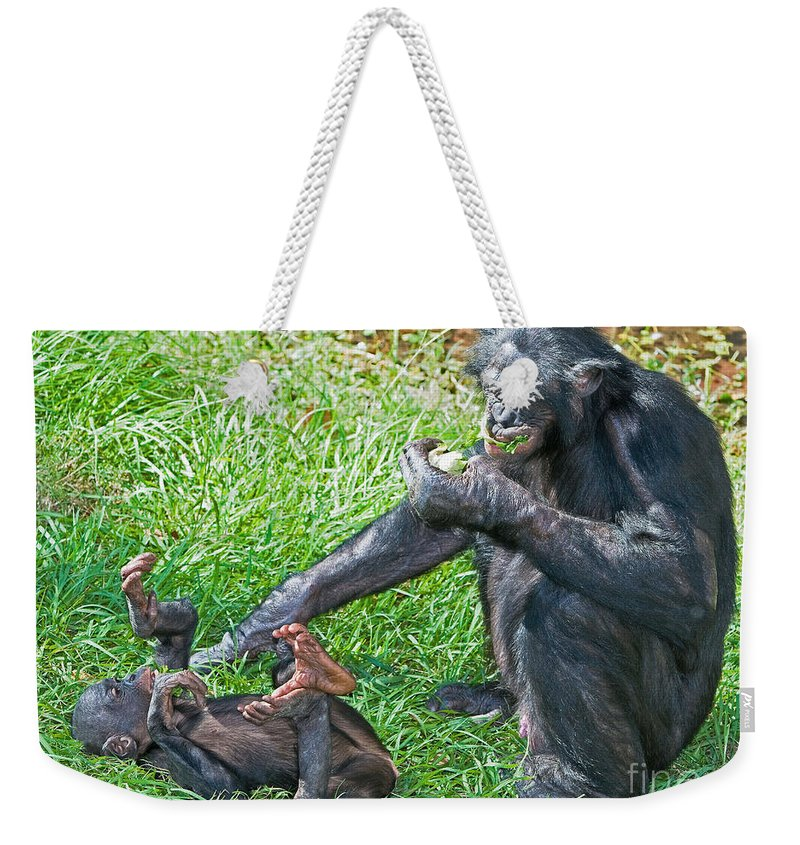 Bonobo Weekender Tote Bag featuring the photograph Bonobo Adult And Baby by Millard H. Sharp