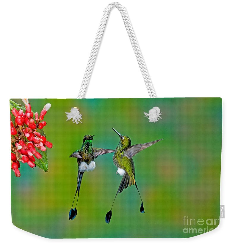 Fauna Weekender Tote Bag featuring the photograph Booted Racket-tail Hummingbird Males by Anthony Mercieca