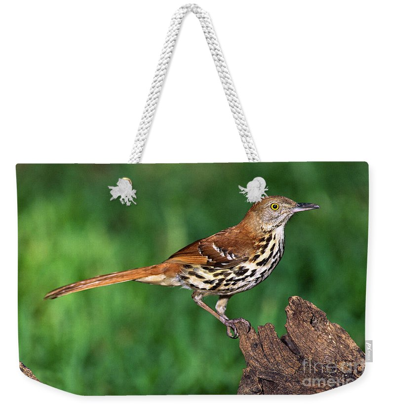 Animal Weekender Tote Bag featuring the photograph Brown Thrasher by Millard H. Sharp