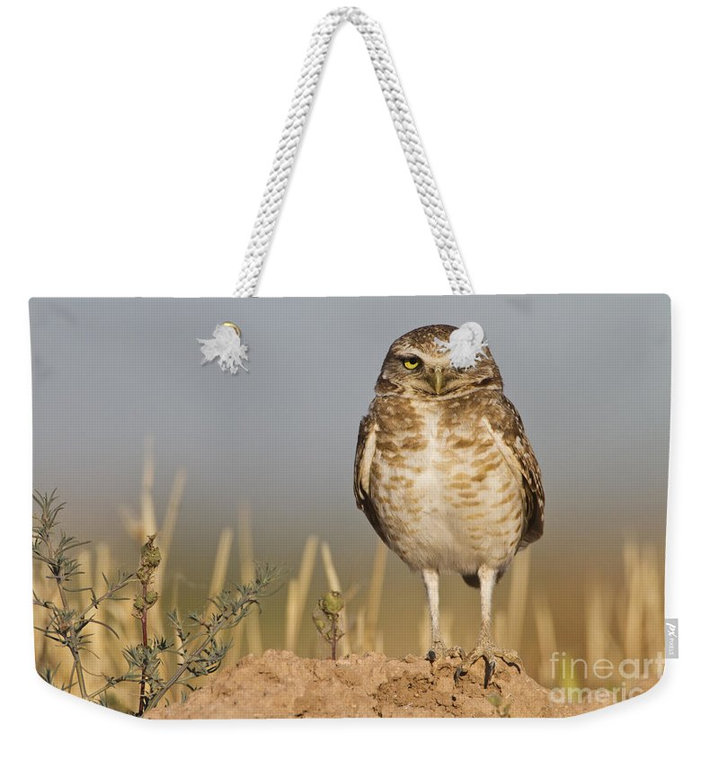 Owl Weekender Tote Bag featuring the photograph Burrowing Owl by Bryan Keil