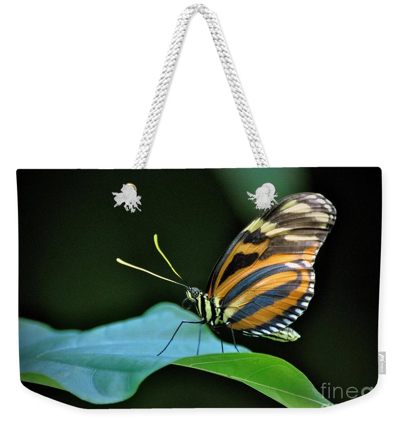 Butterfly Weekender Tote Bag featuring the photograph Butterfly by Savannah Gibbs