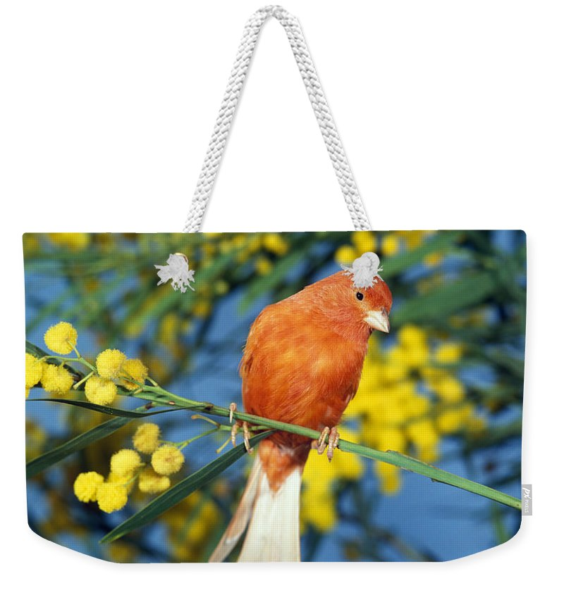 Adult Weekender Tote Bag featuring the photograph Canari De Couleur Rouge by Gerard Lacz