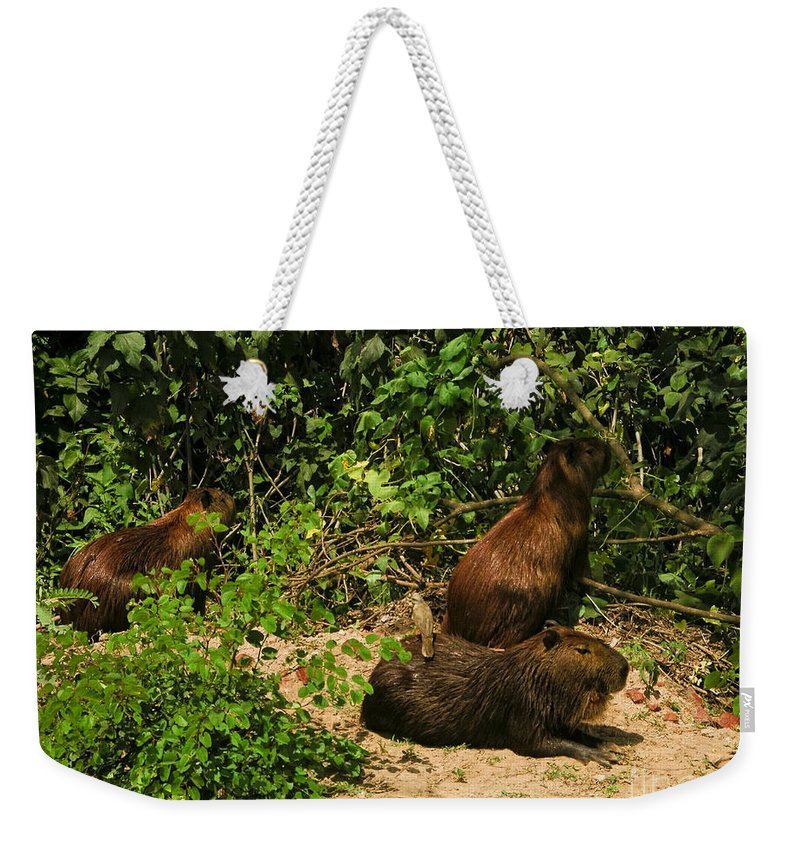 Animals Weekender Tote Bag featuring the digital art Capybara by Carol Ailles
