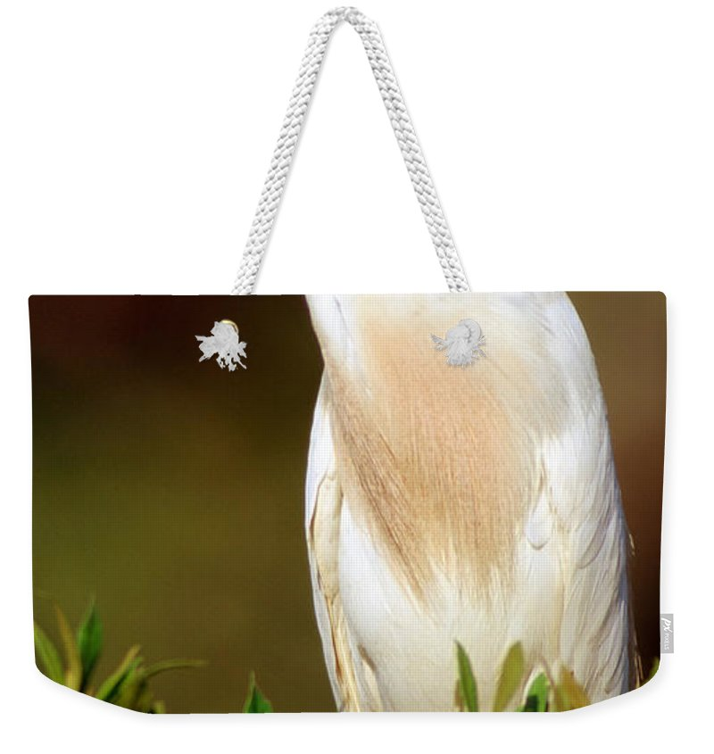 Animal Weekender Tote Bag featuring the photograph Cattle Egret Adult In Breeding Plumage by Millard H. Sharp