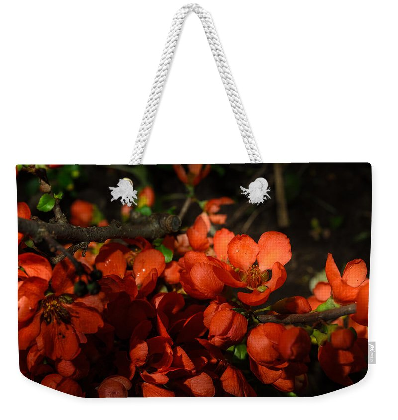 Spring Weekender Tote Bag featuring the photograph Chaenomeles by Michael Goyberg