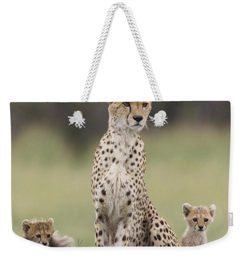Mp Weekender Tote Bag featuring the photograph Cheetah Mother And Cubs Maasai Mara by Suzi Eszterhas