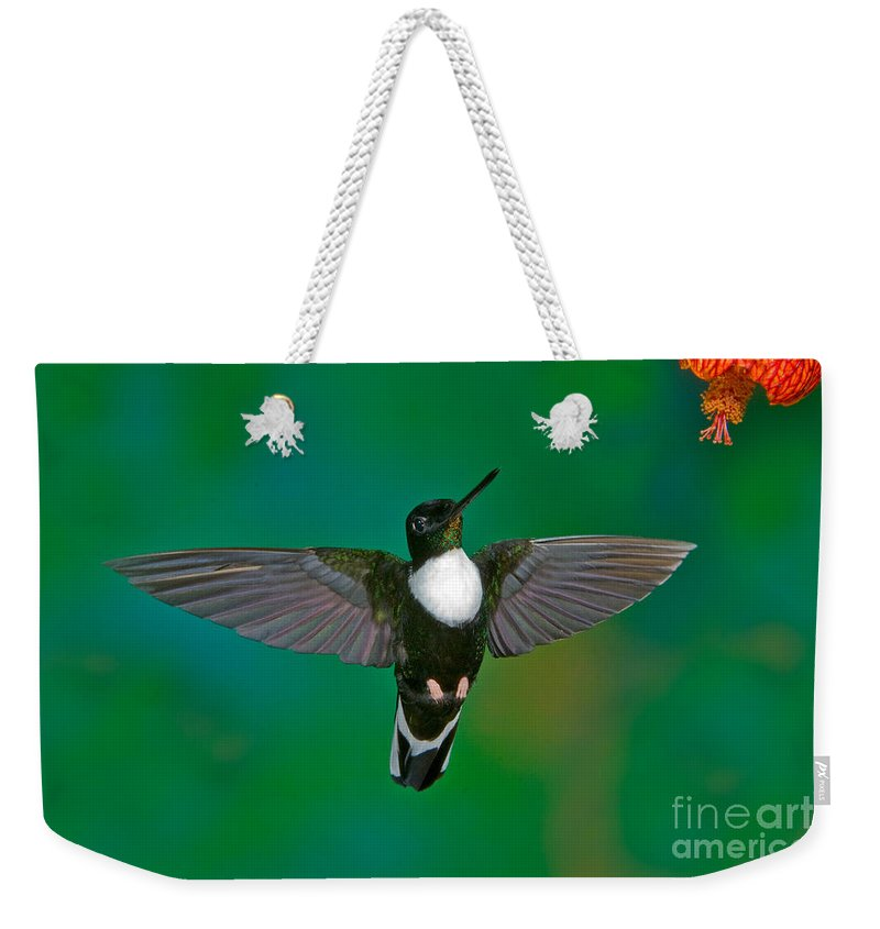 Animal Weekender Tote Bag featuring the photograph Collared Inca Hummngbird by Anthony Mercieca