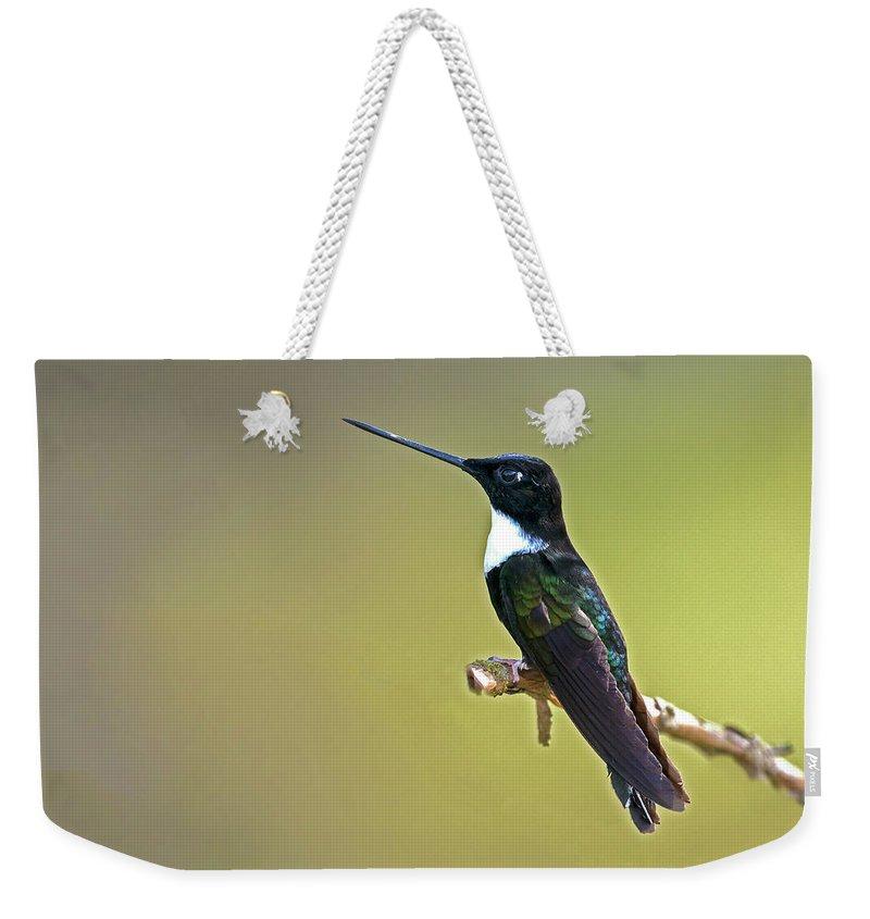 Bird Weekender Tote Bag featuring the photograph Collared Inca by Juan Jose Arango